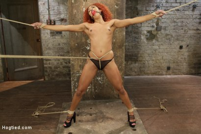 Daisy Ducati is gagged, suspended, hogtied, fucked with a dick on a stick, tickled, caned and vibrated to overwhelming orgasms
