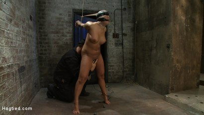 Photo number 11 from Girl from Hawaii, walks into the wrong sub basement,<br> Gets the Insex treatment.  So helpless.. shot for Hogtied on Kink.com. Featuring Kayme Kai in hardcore BDSM & Fetish porn.