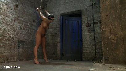 Photo number 14 from Girl from Hawaii, walks into the wrong sub basement,<br> Gets the Insex treatment.  So helpless.. shot for Hogtied on Kink.com. Featuring Kayme Kai in hardcore BDSM & Fetish porn.