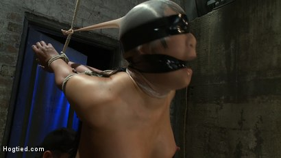 Photo number 8 from Girl from Hawaii, walks into the wrong sub basement,<br> Gets the Insex treatment.  So helpless.. shot for Hogtied on Kink.com. Featuring Kayme Kai in hardcore BDSM & Fetish porn.
