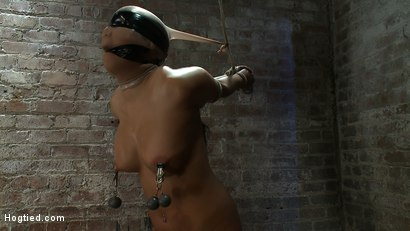 Photo number 13 from Girl from Hawaii, walks into the wrong sub basement,<br> Gets the Insex treatment.  So helpless.. shot for Hogtied on Kink.com. Featuring Kayme Kai in hardcore BDSM & Fetish porn.