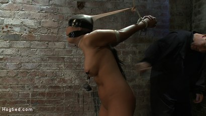 Photo number 7 from Girl from Hawaii, walks into the wrong sub basement,<br> Gets the Insex treatment.  So helpless.. shot for Hogtied on Kink.com. Featuring Kayme Kai in hardcore BDSM & Fetish porn.