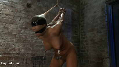 Photo number 9 from Girl from Hawaii, walks into the wrong sub basement,<br> Gets the Insex treatment.  So helpless.. shot for Hogtied on Kink.com. Featuring Kayme Kai in hardcore BDSM & Fetish porn.
