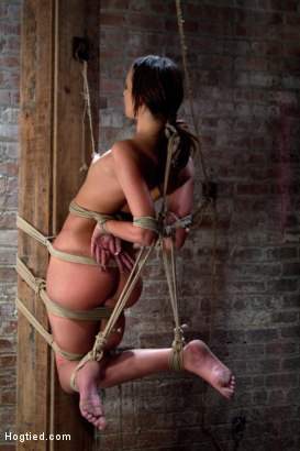 Photo number 12 from Predicament Category 5 bondage.   Pulled back by hair tie, pulled forward by nipples! shot for Hogtied on Kink.com. Featuring Katie Jordin in hardcore BDSM & Fetish porn.