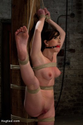Photo number 8 from Bound with her leg up and wet pussy exposed  this beautiful thing is made to cum over and over. shot for Hogtied on Kink.com. Featuring Jennifer White in hardcore BDSM & Fetish porn.