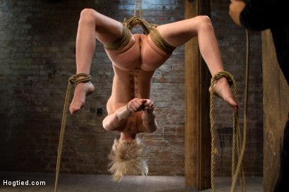 Photo number 4 from Hot blond suffers though a brutal Category 5 inverted suspension.<br>How many orgasms can she take?  shot for Hogtied on Kink.com. Featuring Cherry Torn in hardcore BDSM & Fetish porn.