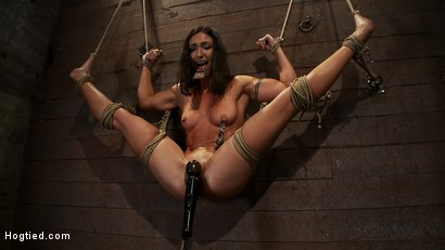 Photo number 13 from Gymnast, fitness model has her flexibility put to the test.<br>Made to cum until she is a sweaty pig shot for Hogtied on Kink.com. Featuring Wenona in hardcore BDSM & Fetish porn.