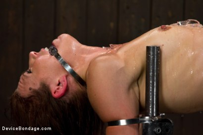 Photo number 6 from Through the ringer and hung to dry shot for Device Bondage on Kink.com. Featuring Delilah Knight in hardcore BDSM & Fetish porn.