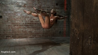Photo number 11 from Hot MILF suffers the most painful bondage<br>Category 5 suspension made to squirt all over the place shot for Hogtied on Kink.com. Featuring Felony in hardcore BDSM & Fetish porn.