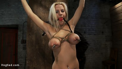 "Photo number 6 from Hot 19yr Blond with huge natural ""F"" breasts<br>This is her first ever hardcore bondage shoot. shot for Hogtied on Kink.com. Featuring Haley Cummings in hardcore BDSM & Fetish porn."