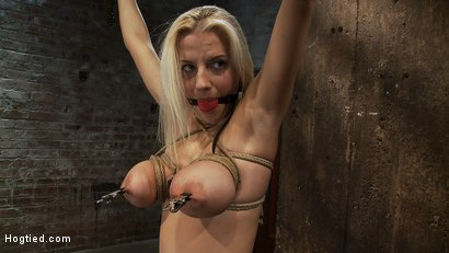 "Photo number 8 from Hot 19yr Blond with huge natural ""F"" breasts<br>This is her first ever hardcore bondage shoot. shot for Hogtied on Kink.com. Featuring Haley Cummings in hardcore BDSM & Fetish porn."