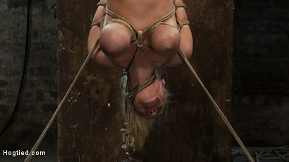 "Photo number 7 from 19yr old blond with huge ""F"" size breasts<br>is made to cum over & over.  Suffers horrific bondage! shot for Hogtied on Kink.com. Featuring Haley Cummings in hardcore BDSM & Fetish porn."