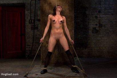 Photo number 13 from Bondage virgin experiences inescapable rope bondage<br> Unable to prevent us from making her cum! shot for Hogtied on Kink.com. Featuring Evilyn Fierce in hardcore BDSM & Fetish porn.