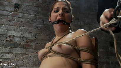 Photo number 6 from Cute girl next door is turned into a<br>helpless, drooling, mess of a slut, can't stop from cumming. shot for Hogtied on Kink.com. Featuring Evilyn Fierce in hardcore BDSM & Fetish porn.