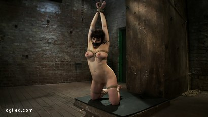 Photo number 15 from Actual member of the site applies to model & is accepted.<br>This big titted MILF is bound & abused. shot for Hogtied on Kink.com. Featuring Annika in hardcore BDSM & Fetish porn.