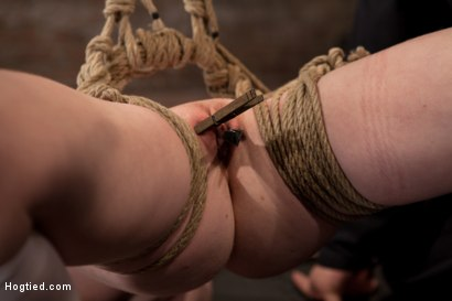 Photo number 14 from Sexy girl next door bound into a brutal back arch from hell.<br>Made to cum like a common slut. shot for Hogtied on Kink.com. Featuring Nicki Blue in hardcore BDSM & Fetish porn.
