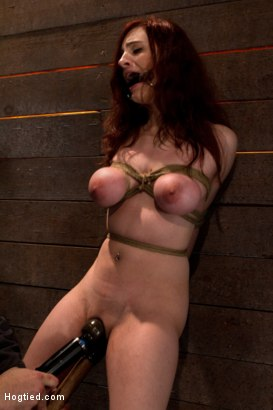 "Photo number 13 from 19 yr old with massive ""F"" natural breasts walks the crotch line from hell<br>Made to cum & cum HARD shot for Hogtied on Kink.com. Featuring Iona Grace in hardcore BDSM & Fetish porn."