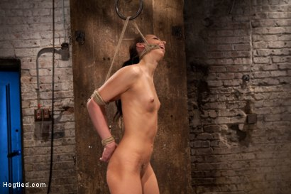 Photo number 6 from Sexy, tall, long legged, tan girl next door<br>Brutal bondage, neck rope, breath play, made to come! shot for Hogtied on Kink.com. Featuring Tiffany Tyler in hardcore BDSM & Fetish porn.