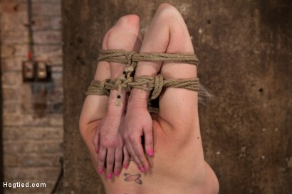 Photo number 1 from Blond tied into modified Category 4 Hogtied   Sucks cock, punished to the limit of her flexibility! shot for Hogtied on Kink.com. Featuring Isis Love and Cherry Torn in hardcore BDSM & Fetish porn.
