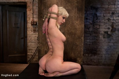 Photo number 3 from Blond tied into modified Category 4 Hogtied   Sucks cock, punished to the limit of her flexibility! shot for Hogtied on Kink.com. Featuring Isis Love and Cherry Torn in hardcore BDSM & Fetish porn.