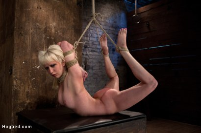 Photo number 7 from Blond tied into modified Category 4 Hogtied<br>Sucks cock, punished to the limit of her flexibility! shot for Hogtied on Kink.com. Featuring Isis Love and Cherry Torn in hardcore BDSM & Fetish porn.