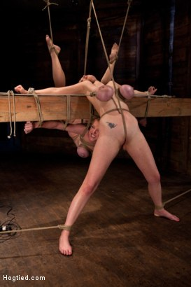 Photo number 4 from 2 girls, massive tits, bound, 1 suspended, 1 neck tied down & arched.<br>Both made to brutally cum! shot for Hogtied on Kink.com. Featuring Katie Kox and Dee Williams in hardcore BDSM & Fetish porn.