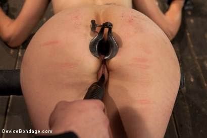 Photo number 7 from Breaking of Bobbi Starr shot for Device Bondage on Kink.com. Featuring Bobbi Starr in hardcore BDSM & Fetish porn.