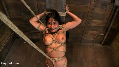 Photo number 12 from Hot sexy Hawaiian is bound to a pole, lifted to her tip toes with a brutal crotch rope. Made to cum! shot for Hogtied on Kink.com. Featuring Mahina Zaltana in hardcore BDSM & Fetish porn.