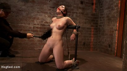 "Photo number 5 from Local ""girl next door"" bound up tight & helpless, flogged, nipple clamped, made to suck cock, & cum! shot for Hogtied on Kink.com. Featuring Serena Blair in hardcore BDSM & Fetish porn."