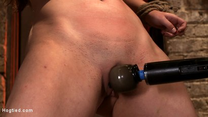 "Photo number 8 from Local ""girl next door"" bound up tight & helpless, flogged, nipple clamped, made to suck cock, & cum! shot for Hogtied on Kink.com. Featuring Serena Blair in hardcore BDSM & Fetish porn."