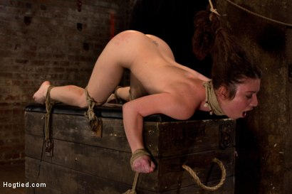 Photo number 9 from Girl next door bound ass up. Double penetrated<br>Skull fucked & caned, vibrated 2 multiple orgasms  shot for Hogtied on Kink.com. Featuring Serena Blair in hardcore BDSM & Fetish porn.
