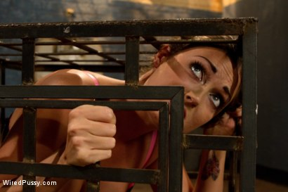 Photo number 3 from Suffer for Me! shot for Wired Pussy on Kink.com. Featuring Lorelei Lee and Melissa Jacobs in hardcore BDSM & Fetish porn.