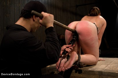 Photo number 2 from Made to suffer, made to cum - restrictive bondage equals squirting orgasm shot for Device Bondage on Kink.com. Featuring Sasha in hardcore BDSM & Fetish porn.