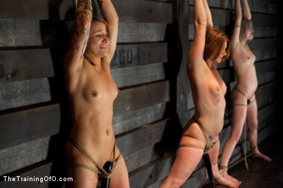 Photo number 6 from <b>Four Girl Intake<br>Sado-Masochists Slave Testing  shot for The Training Of O on Kink.com. Featuring Jessie Cox, Goddess Annika Amour, CiCi Rhodes, Alani Pi and Maestro Stefanos in hardcore BDSM & Fetish porn.