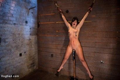 Photo number 7 from Wrist suspension while impaled on a cock & vibrator<br>Each brutal orgasm weakens & further impales. shot for Hogtied on Kink.com. Featuring Ashli  Orion in hardcore BDSM & Fetish porn.