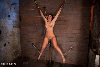 Photo number 9 from Wrist suspension while impaled on a cock & vibrator<br>Each brutal orgasm weakens & further impales. shot for Hogtied on Kink.com. Featuring Ashli  Orion in hardcore BDSM & Fetish porn.