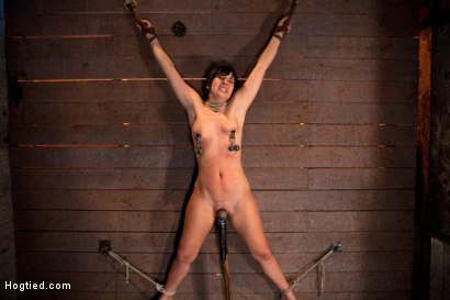 Photo number 11 from Wrist suspension while impaled on a cock & vibrator<br>Each brutal orgasm weakens & further impales. shot for Hogtied on Kink.com. Featuring Ashli  Orion in hardcore BDSM & Fetish porn.