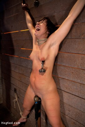 Photo number 5 from Wrist suspension while impaled on a cock & vibrator<br>Each brutal orgasm weakens & further impales. shot for Hogtied on Kink.com. Featuring Ashli  Orion in hardcore BDSM & Fetish porn.