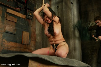 Photo number 10 from Lochai, Blaze and Mika Tan shot for Hogtied on Kink.com. Featuring Mika Tan, Lochai and Blaze in hardcore BDSM & Fetish porn.