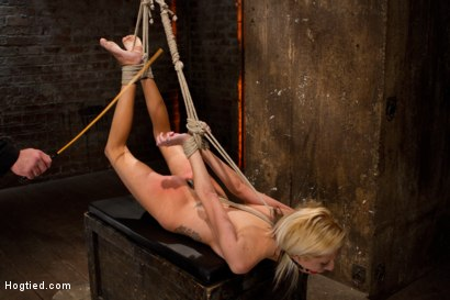 Photo number 6 from Hot flexible blond suffers a Category 5 suspension. Anal hook, heavy nipple weights, made to cum. shot for Hogtied on Kink.com. Featuring Rene Phoenix in hardcore BDSM & Fetish porn.