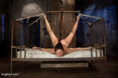 Photo number 13 from Missy Minks Ripened and Violated shot for Hogtied on Kink.com. Featuring Missy Minks in hardcore BDSM & Fetish porn.