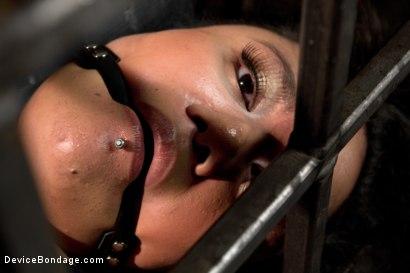 Photo number 6 from Annie Cruz - Bitch in Heat shot for Device Bondage on Kink.com. Featuring Annie Cruz in hardcore BDSM & Fetish porn.