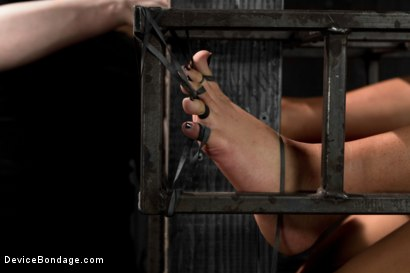 Photo number 3 from Annie Cruz - Bitch in Heat shot for Device Bondage on Kink.com. Featuring Annie Cruz in hardcore BDSM & Fetish porn.