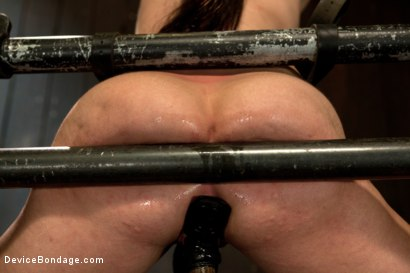Photo number 13 from Bryn Blayne gets a smack-down into submission - Live Show Part 3 shot for Device Bondage on Kink.com. Featuring Bryn Blayne and Alani Pi in hardcore BDSM & Fetish porn.