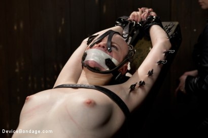 Photo number 6 from Alani Pi - Head Shaved Slut Live Show - Part 4 shot for Device Bondage on Kink.com. Featuring Alani Pi and Coral Aorta in hardcore BDSM & Fetish porn.