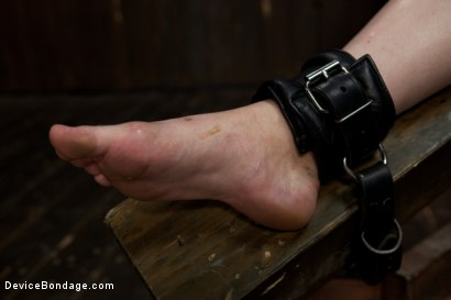 Photo number 7 from Alani Pi - Head Shaved Slut Live Show - Part 4 shot for Device Bondage on Kink.com. Featuring Alani Pi and Coral Aorta in hardcore BDSM & Fetish porn.