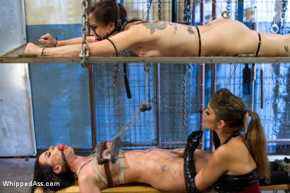 Photo number 2 from Obedient Lesbian Whores shot for Whipped Ass on Kink.com. Featuring Brandy Aniston, Felony and Bryn Blayne in hardcore BDSM & Fetish porn.