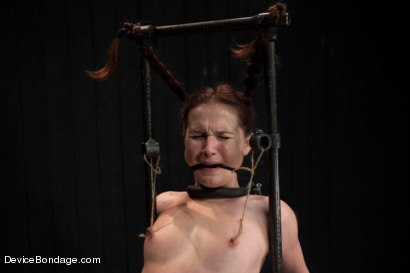 Photo number 7 from Pig shot for Device Bondage on Kink.com. Featuring AnnaBelle Lee in hardcore BDSM & Fetish porn.