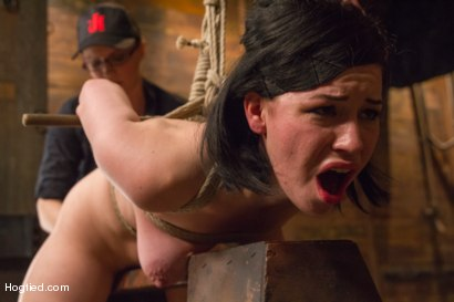 Photo number 14 from Pale Big Breasted Brunette Beauty Gets Anal Cherry Taken shot for Hogtied on Kink.com. Featuring Belle Noire in hardcore BDSM & Fetish porn.
