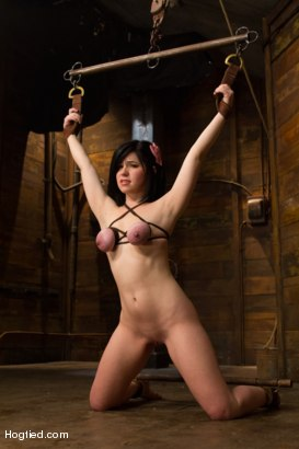 Photo number 4 from Pale Big Breasted Brunette Beauty Gets Anal Cherry Taken shot for Hogtied on Kink.com. Featuring Belle Noire in hardcore BDSM & Fetish porn.
